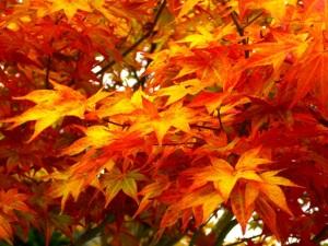 Autumn Leaves  Courtesy of Janis Christian